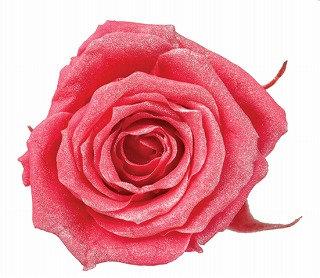 FL056-08 Sparkling Baby Rose