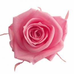 FL0300-47 Mediana Rose