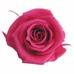 FL0300-58 Mediana Rose