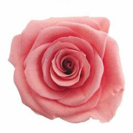 FL0300-65 Mediana Rose