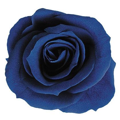 FL0300-59 Mediana Rose