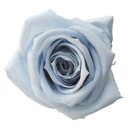 FL0300-56 Mediana Rose