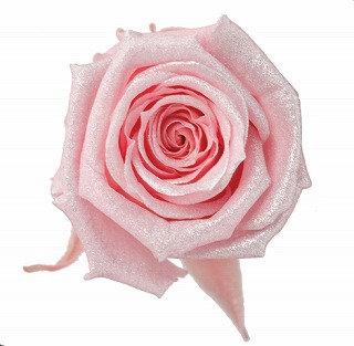 FL056-07 Sparkling Baby Rose