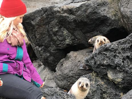 seal colony .jpg