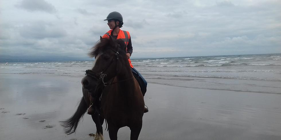 Equine Confidence Course