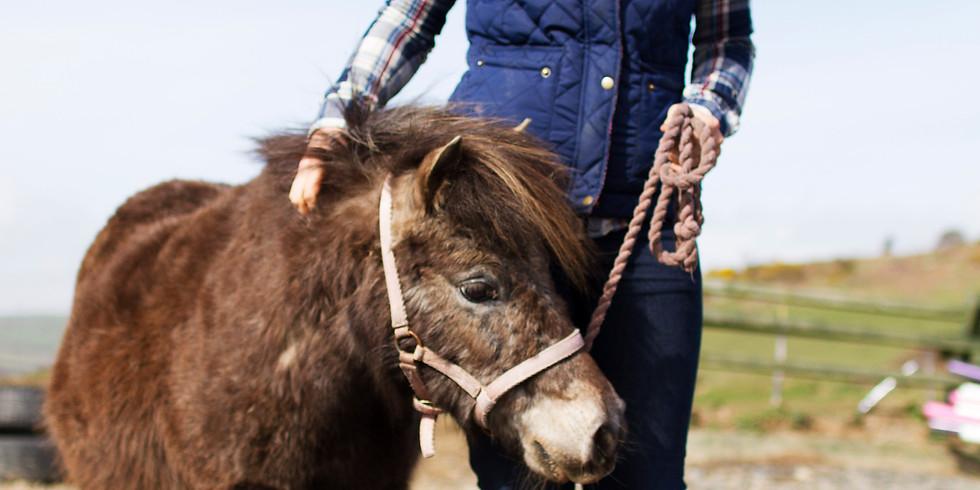 Ethical Horse Training Weekend