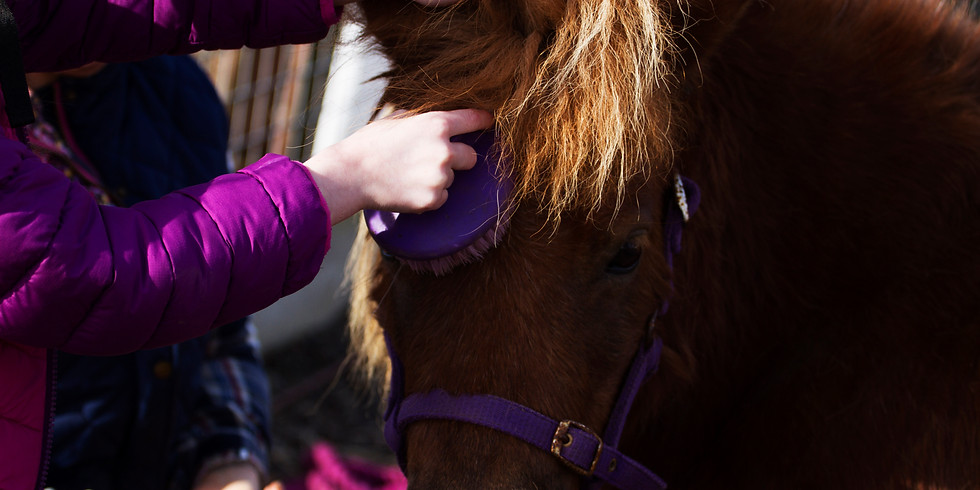 Basic Horse Care course  (1 day)