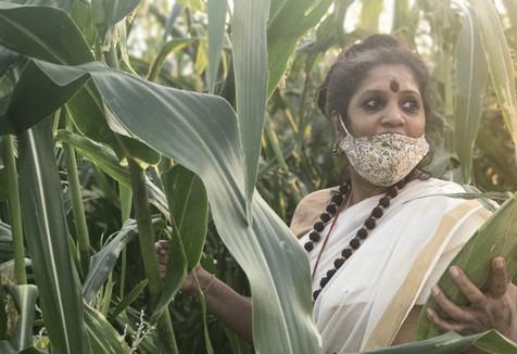 Organic Agriculture 1