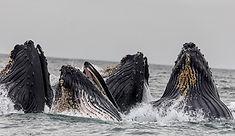 Подгузники китов