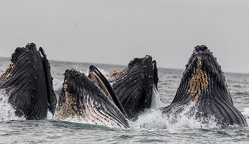 Vagem de baleias