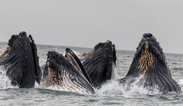 My work with Whales in the Atlantic
