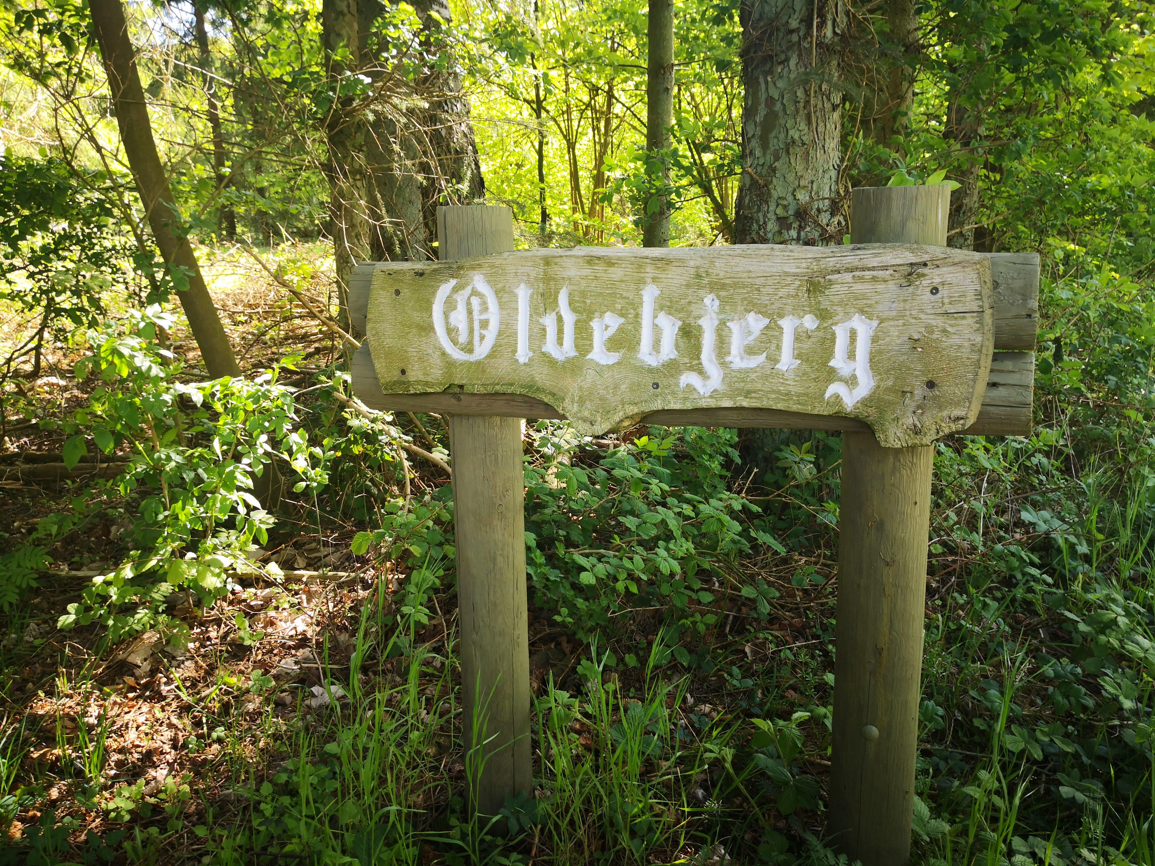 Oldebjerg (4)