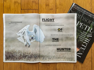 ORI & Snowy Owls featured in Smithsonian Magazine!