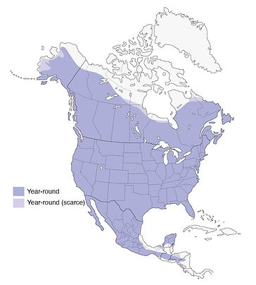 great horned owl, great horned owl distribution
