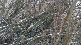 LOOK Closely. How many owls do you see?