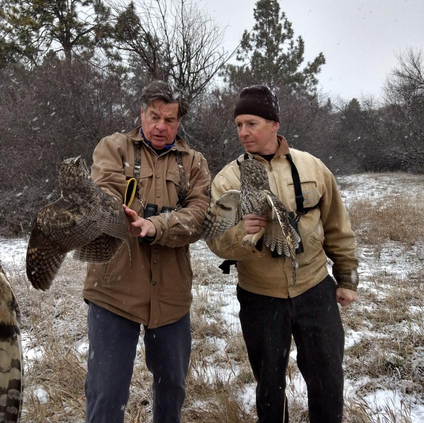 LONG-EARED OWL PROJECT