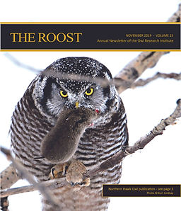 Copy of 2019 The Roost. A northern hawk owl holds a dead vole in its beak.