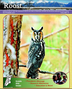2015 edition of The Roost. A long-eared owl perched on a branch looking at the camera.
