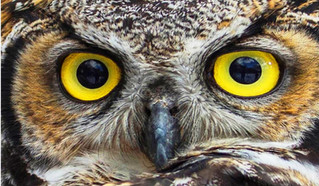 Join us in Bozeman Tonight for Owls of Montana presentation