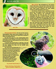 2014 The Roost. Images of a barn owl, flamulated owls, and text accompaning both.