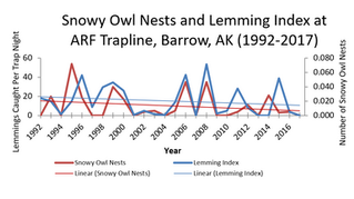 Snowy Owl Breeding Research