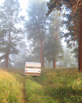 a trailer is parked on a two-track in an open pine forest