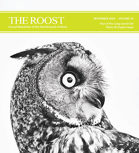 Cover of The Roost 2020 edition. A black and white image of a long-eared owl, head turned to the right.