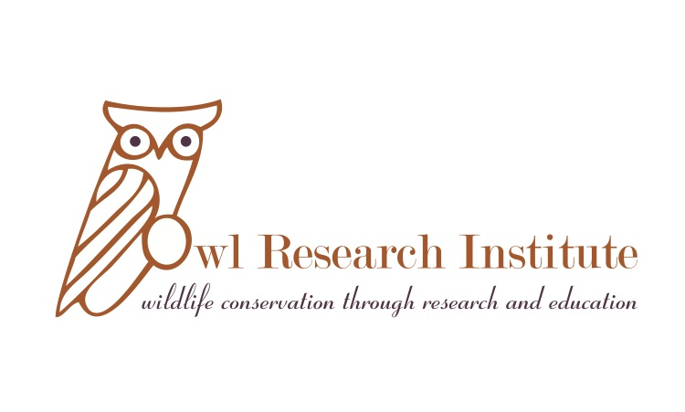 About Owls I Owl Research Institute