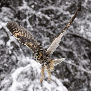 OWLS: Life in the Cold