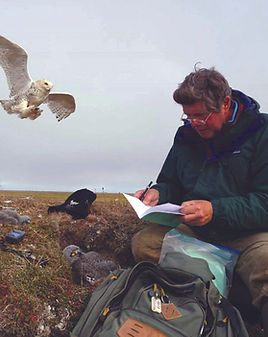 A white man, Denver Holt, sits on the ground next to a snowy owl nest. A male snowy owl is swooping in to attack him.