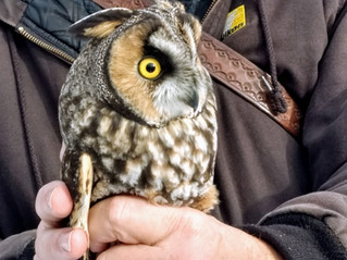 A Day in the Field with the Five Valleys Audubon Society