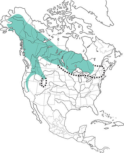 great gray owl, great gray owl distribution, great gray owl migration