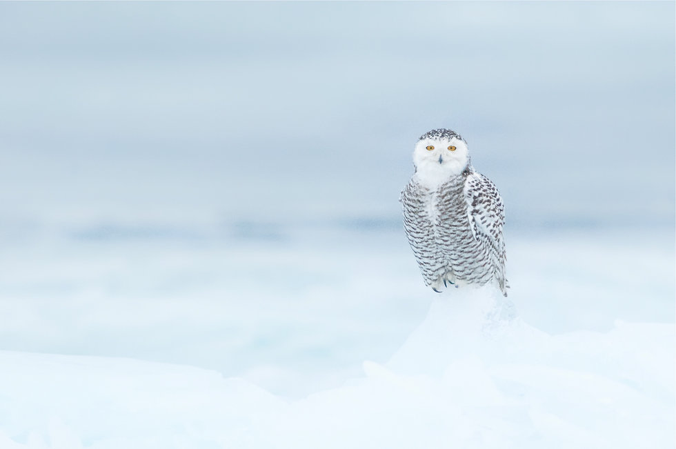 snowy-on-ice_12357827294_o.jpg