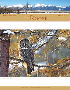 Cover of 2018 The Roost. A great grey owl perched on a snowy branch.