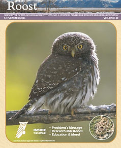 Cover 2016 The Roost. A northern pygmy owl on a branch looking at the camera.