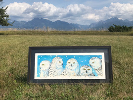 Online Auction to Support ORI's Snowy Owl Research