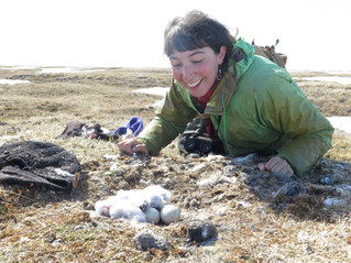 NEON Volunteers on the Snowy Owl Project