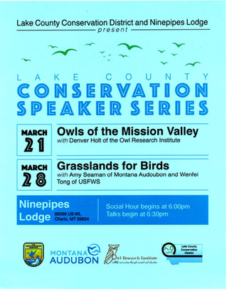 Owls of the Mission Valley, March 21