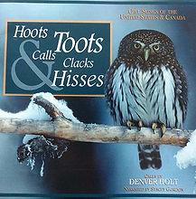 Northern pygmy owl, pygmy owl hoot, pygmy owl call, pygmy owl