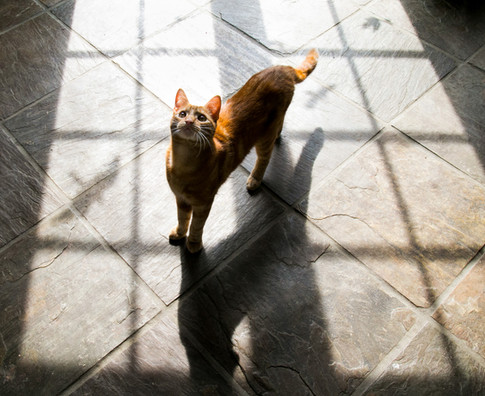 Cat at home portrait