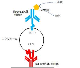 PD-L1陽性エクソソーム反応模式図.png