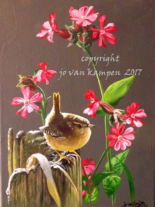 Wren and red campions, original oil painting.