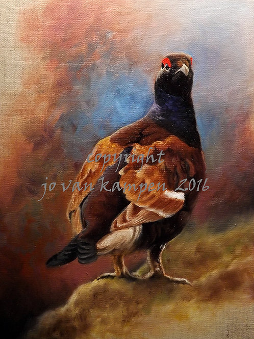 Black grouse, original painting.