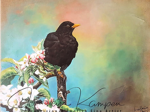 Blackbird and apple blossom.