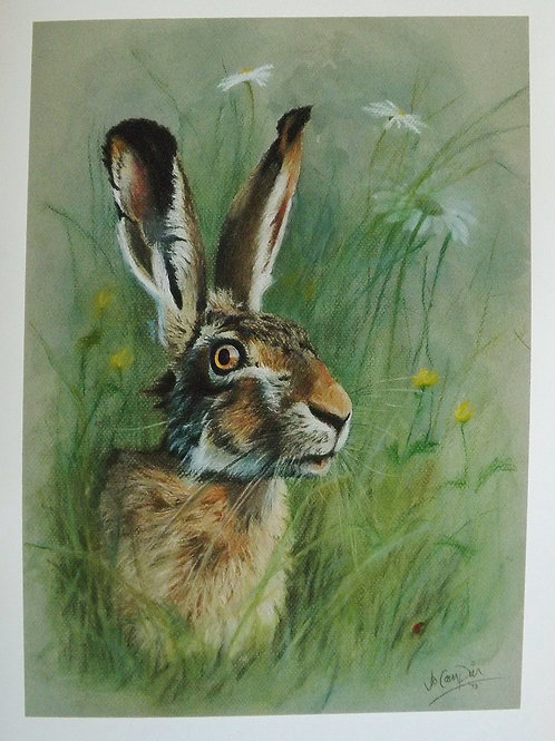 Brown Hare pastel