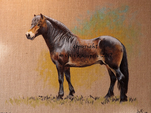 Exmoor pony, original painting.