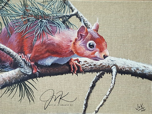 Red squirrel pine twig print