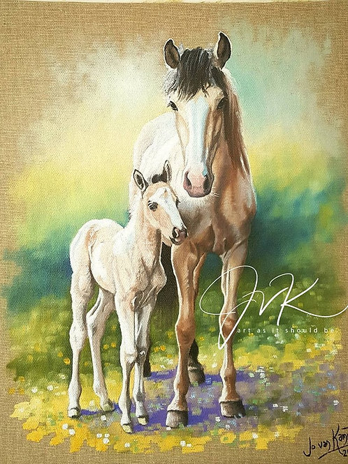 Lyra & Ora. Mustangs.