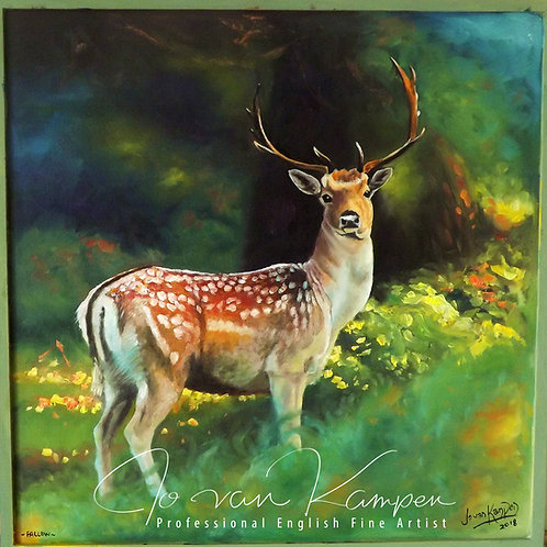 Fallow buck in woodland.