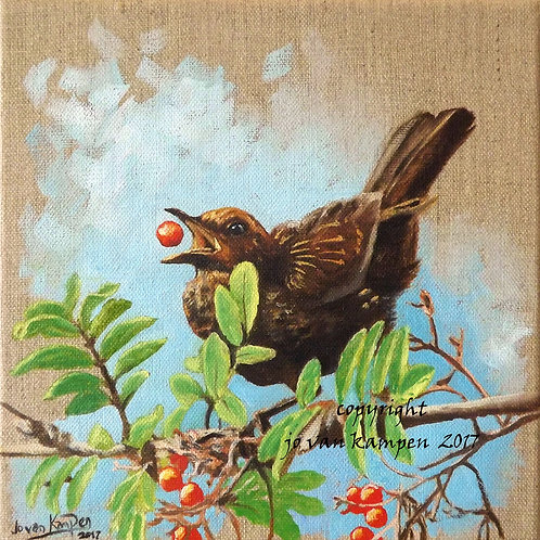 Blackbird and rowan berry, original painting.